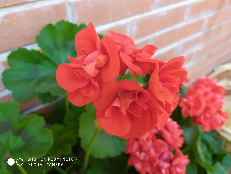 Redmi note 7 Dettaglio fiore